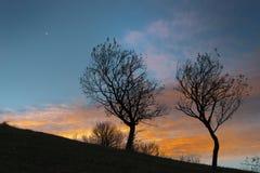 2 пустых дерева на времени захода солнца на холме Стоковое Фото