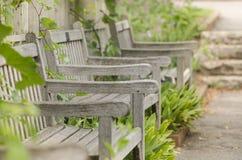 3 пустых деревянных стуль под виноградными лозами Стоковые Изображения