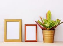 2 пустых рамки золота для изображений и завод дома на светлом ба Стоковая Фотография RF
