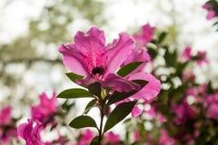 Путайте подъем пчелы высокий стоковые изображения