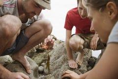 Путешественники смотря на море животное на береге Стоковые Изображения