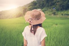 Путешественник женщины смотря заход солнца на зеленых террасах риса field Стоковое фото RF