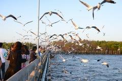 Путешественник приходя здесь для подавая еды к чайкам Стоковая Фотография RF