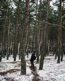 Путешественник человека с рюкзаком в лесе снега стоковые изображения rf
