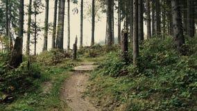 Путешествие или прогулка по лесным тропе по деревьям в горном ландшафте сток-видео