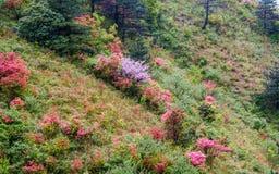 Путешествие старого следа Huihang пешее Стоковое Изображение