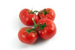 путешествие томатов Стоковое Изображение