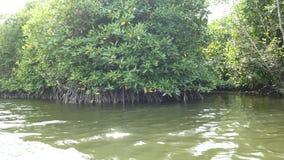 Путешествие шлюпки мангровы через каналы леса мангровы в Индонезии акции видеоматериалы