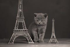Путешествие Eiffel портрета котят близко, Париж Стоковые Изображения RF