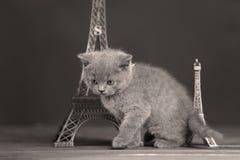 Путешествие Eiffel портрета котят близко, Париж Стоковые Изображения