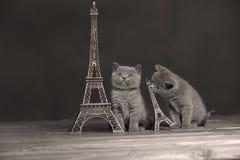 Путешествие Eiffel портрета котят близко, Париж Стоковые Фотографии RF