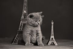 Путешествие Eiffel портрета котят близко, Париж Стоковое Изображение