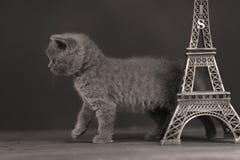 Путешествие Eiffel портрета котят близко, Париж Стоковая Фотография