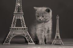 Путешествие Eiffel портрета котят близко, Париж Стоковое Изображение RF