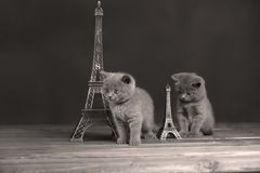 Путешествие Eiffel портрета котят близко, Стоковые Фото