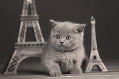 Путешествие Eiffel портрета котят близко, Стоковое Изображение