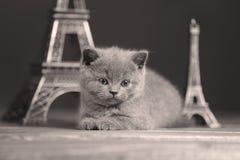 Путешествие Eiffel портрета котят близко, Стоковые Изображения RF