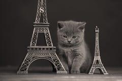 Путешествие Eiffel портрета котят близко, Стоковое фото RF