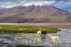 Путешествие Uyuni вокруг озер и вулканов боливийских Анд изумительное перемещение стоковая фотография