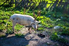 Путешествовать в кавказских горах Стоковые Изображения RF