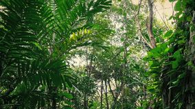 Путешествовать за overgrown стороной утеса в джунглях акции видеоматериалы
