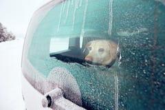 Путешествовать с собакой Стоковые Изображения RF