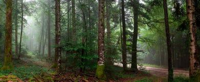 Пути в лесе Стоковая Фотография RF
