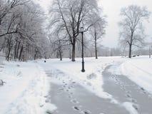 2 пути в снеге стоковые фотографии rf