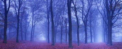 2 пути в темном и туманном лесе, Нидерландах Стоковые Изображения