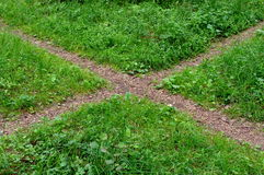 пути зеленого цвета травы пущи перекрестка Стоковое Изображение