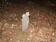 Пути и лесохозяйство леса ночи стоковая фотография