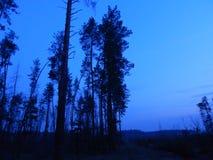 Пути и лесохозяйство леса ночи стоковая фотография rf