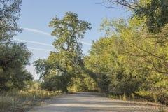 Пути между деревьями Стоковая Фотография
