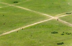 Пути на луге Стоковое Фото