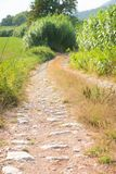 пути s природ Стоковая Фотография RF