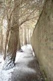 Путь Адена в зиме Стоковое фото RF