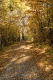 Путь бабьего лета осени Стоковое Изображение