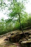 Путь богов стоковое фото rf