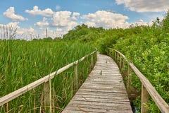 Путь болота идя стоковые изображения