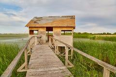 Путь болота идя Стоковое Фото