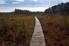 Путь болота Стоковые Фото