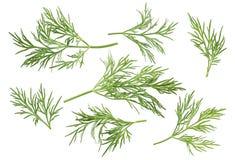 Путь вариантов травы укропа установленный включил изолированный на белой предпосылке Стоковые Изображения RF
