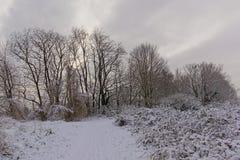 Путь вдоль обнаженных деревьев золы и кустарников ежевики, предусматриванных в снеге стоковые фотографии rf