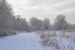 Путь вдоль обнаженных деревьев, кустарников и тростника зимы предусматриванных в снеге стоковое изображение rf