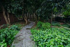 путь весны с зелеными деревьями Стоковые Фото