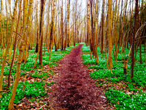 Путь весны Стоковое Изображение RF