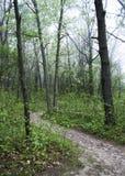 Путь весны Стоковое Фото