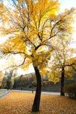Путь велосипеда в парке осени Стоковые Изображения RF