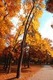 Путь велосипеда в парке осени Стоковое Изображение RF