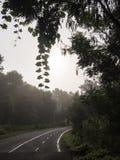 Путь велосипеда в парке Стоковые Фото